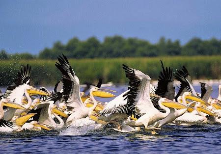 Delta Dunarii.jpg