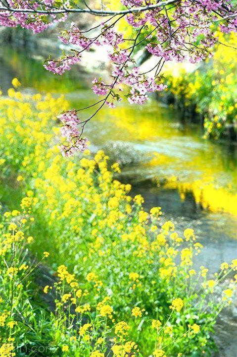 Phong cảnh mùa xuân [sưu tầm]