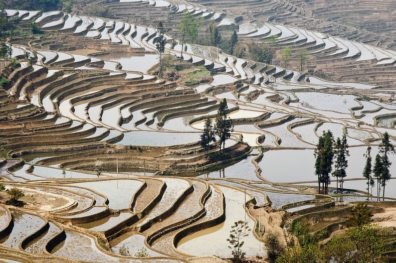 yunnan-rice-terraces2-3
