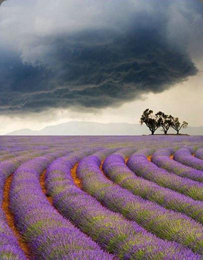 lavender 378181_324442137645477_1200901453_n sun gazing dot com angela cornel photo and francoise weeks