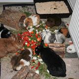 Pebbles, Balthasar, Wickie, Lucy, Kaylin, Lorelai, Nylah, Bolek, Sookie (v.l.uzs)