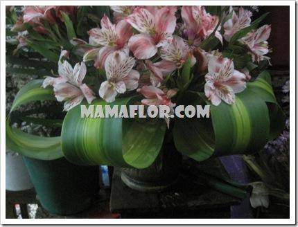 mamaflor-3173