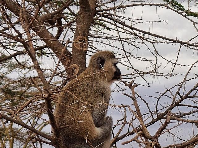 Serengeti 1 138.JPG