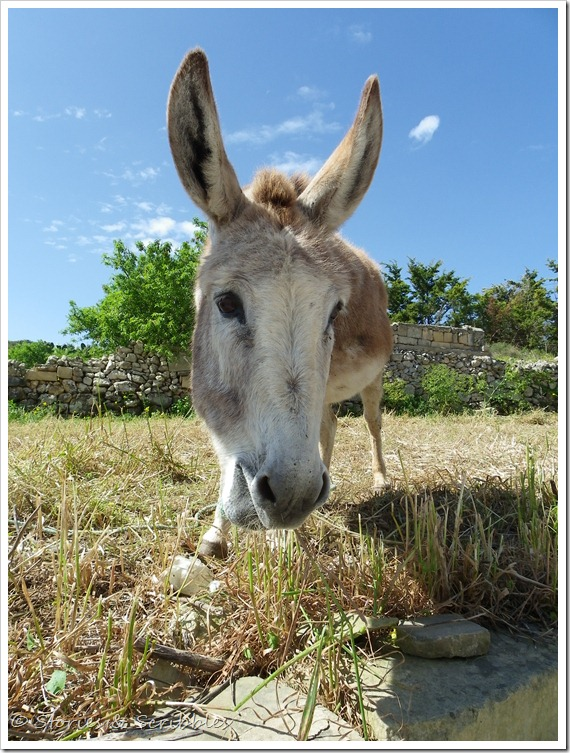 Donkeys (2)