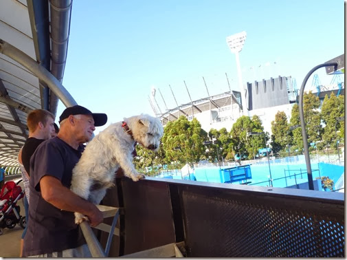 A Dog Watching Tennis