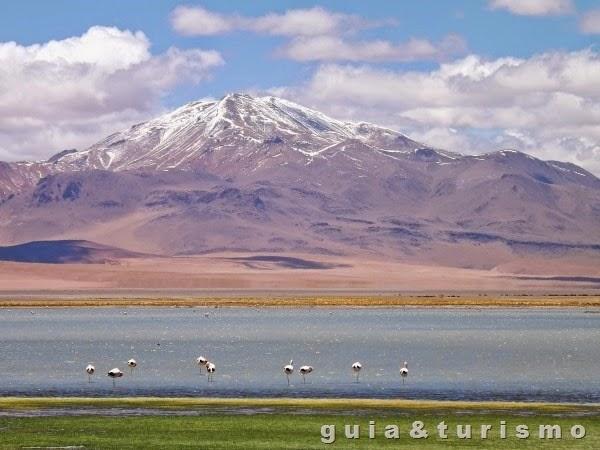 Salar de Tara com Flamingos