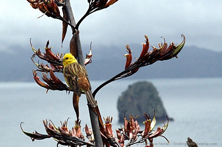 Bird on a branch near Cathedral Cove