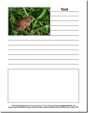 toad page