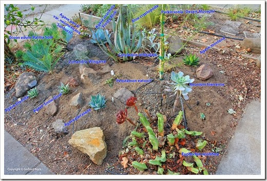 131007_driveway_succulent_bed_after_02