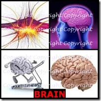 BRAIN- 4 Pics 1 Word Answers 3 Letters