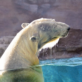 It's a great day for a swim! by Carolyn Parks - Animals Other Mammals