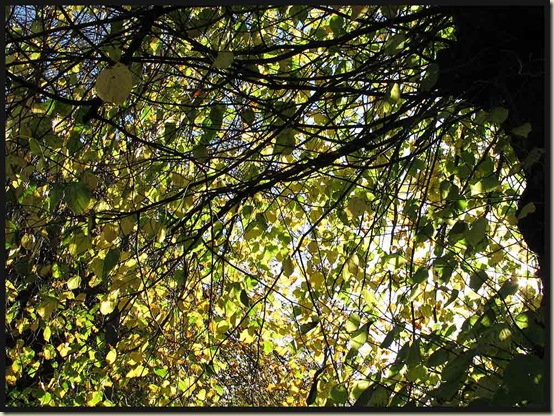 Late leaves in Monyash church yard