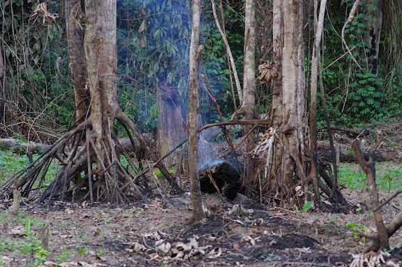 Brûlis près d'Ebogo (Cameroun), 9 avril 2012. Photo : J.-M. Gayman