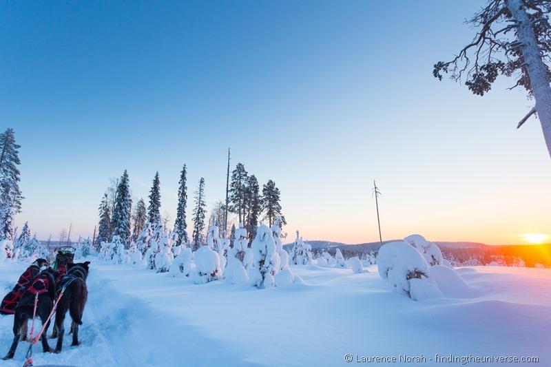 husky dogs sunset finland lapland (2)