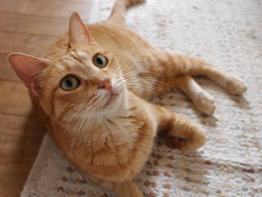 [写真]キッチンの床でくつろぐドーラ