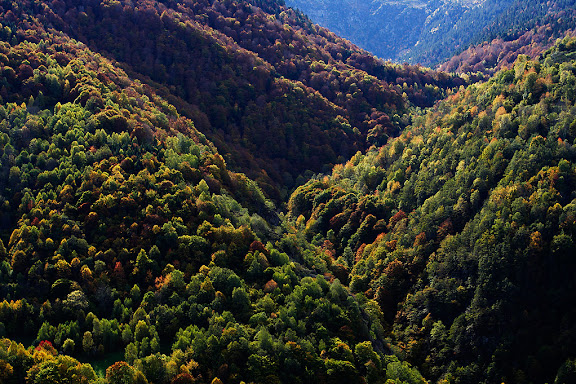 Boscos de tardor a la vall (arriu) de ToranCanejant, Val d'Aran, Lleida