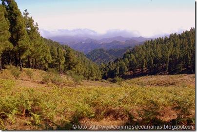 2996 C. de Tejeda-Lomo del Palo