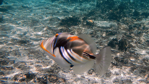 snorkel-fish-vaimaaga-cook-islands - Snorkeling near Vaimaaga on Rarotonga in the Cook Islands.