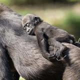 imagenes-de-animales-salvajes-foto-10.jpg