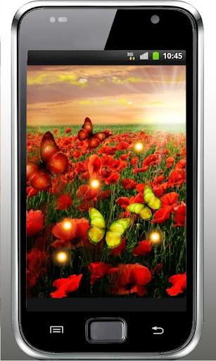 Poppy Flower HD Live Wallpaper