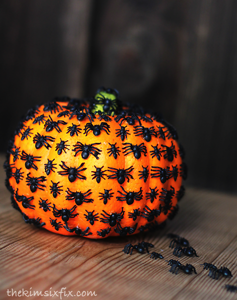 Pumpkin spider bug