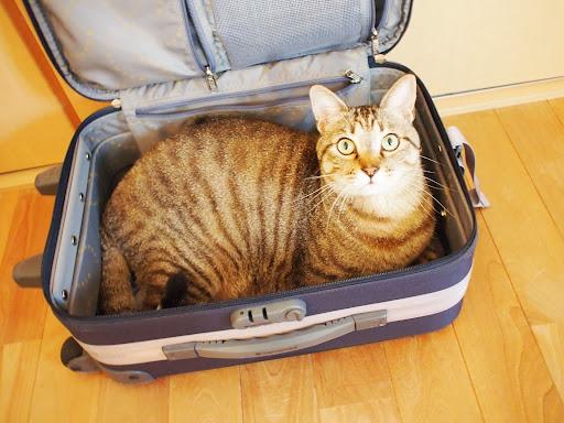 [写真]スーツケースにすっぽりおさまったグスタフ