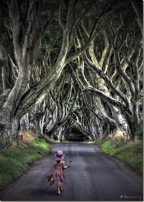 The-dark-hedges-004