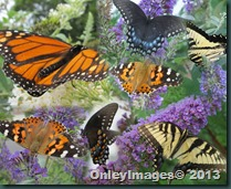 0625 WPG butterfly collage