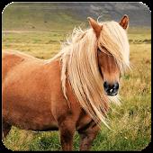 Horse Wallpaper