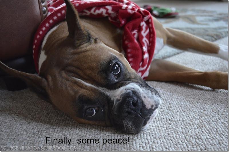Dog fleece sweater 2