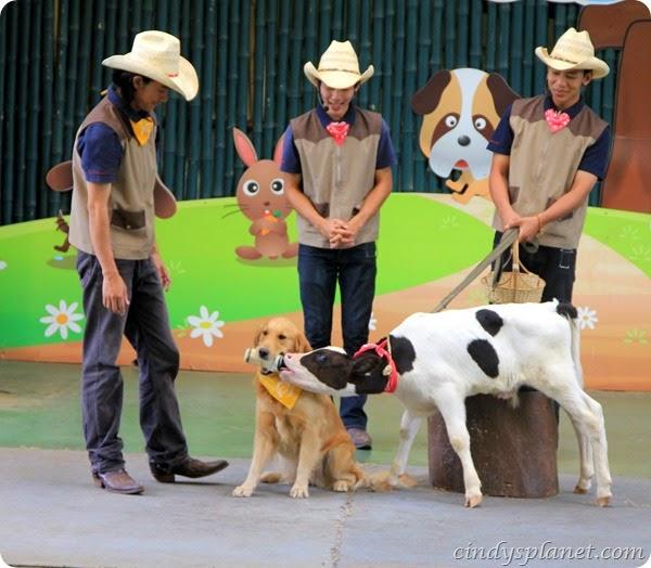 Chok Chai Farm Petting Zoo (2)