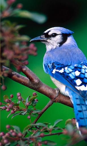 玩免費解謎APP|下載PUZZI困惑明亮小鳥高清 app不用錢|硬是要APP