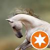 Das tapfere Pferd