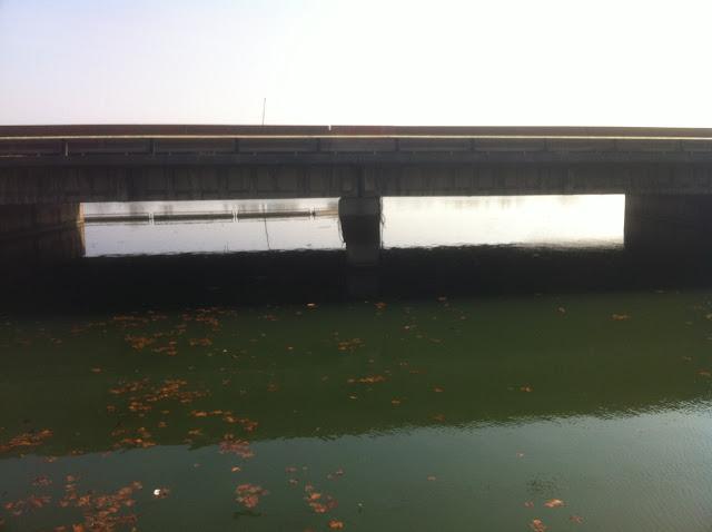 Canal de l'Yzeron - Oullins photo #967