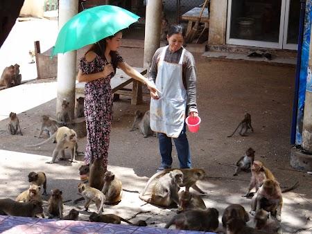 20. Cumparand mancare maimute.JPG