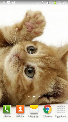 Yavru Kedi Resimleri v2