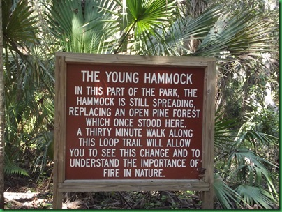 Last day at Highlands Hammock 062