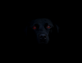 Shadow-Dog_01