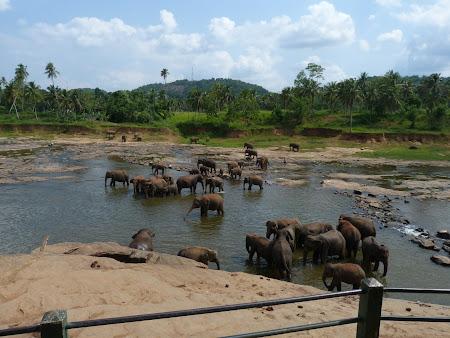 Elefanti la scalda in Sri Lanka