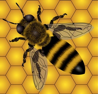 honey-bee-mock-comb