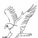eagle_bald.jpg
