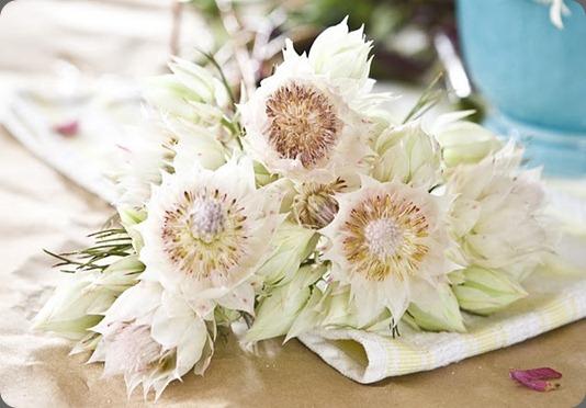 EIMG_9152 kat flower