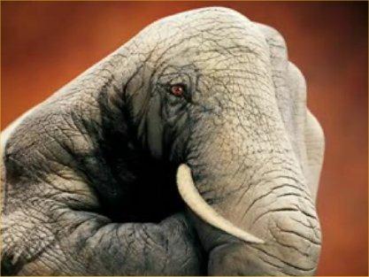 elephant arimani25255B225255D?imgmax800