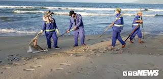 Các công nhân thu gom cá chết dạt vào bờ biển và vận chuyển đi chôn lấp tại bãi rác Khánh Sơn.