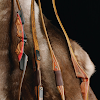 Great Plains Traditional Bow Co.