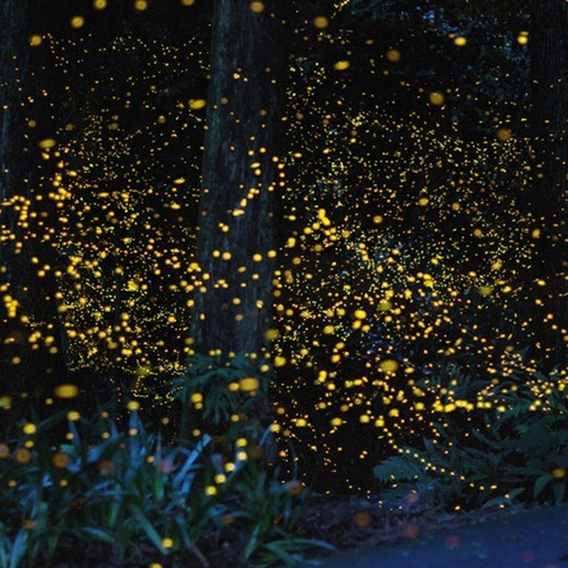 Stunning Long Exposure Photos of Gold Fireflies