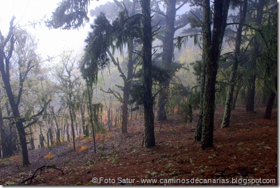 6867 Barranco Andén-Cueva Corcho(Cueva Corcho)