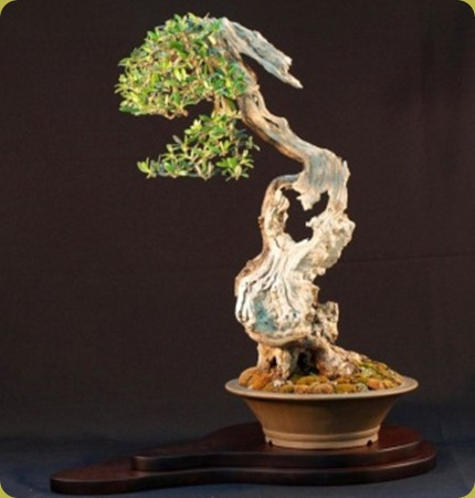 Chugata-bonsai