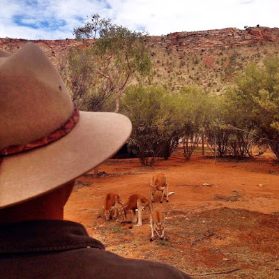The Red Centre Red Kangaroo's and Red Hot experience desertpark NTAustralia ausoutbacknt