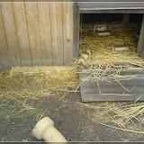 Jugendfarm Moritzhof - Meerschweine